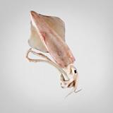 Calamar mitjà de platja