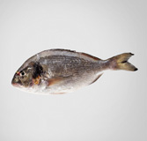 Orada de 350 g d'aqüicultura
